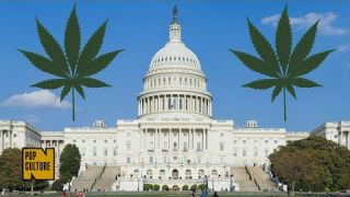 Five Rules You Need To Know About Legal Weed In Washington, D.C